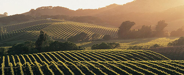 Explore Wine Country